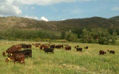 Mival Agraria