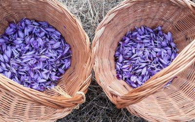 Agroexperiencia dedicada al «Azafrán»