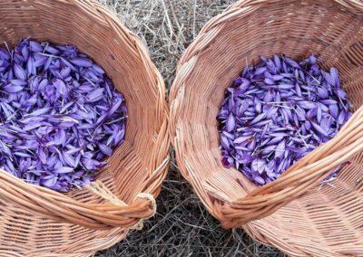 Agroexperiencia Azafrán en Blancas