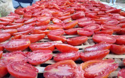 El secado tradicional del tomate Pitero de Caspe